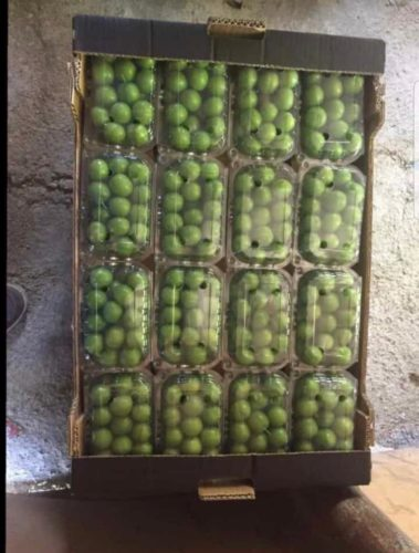 fresh green plum